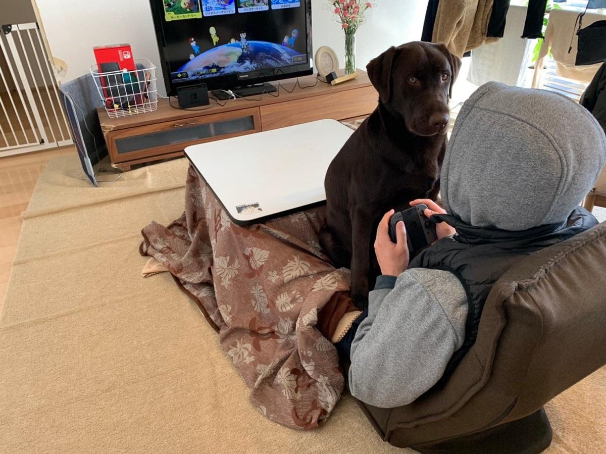 絶対にゲームをしたい飼い主VS絶対に遊んでほしい犬