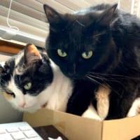 仕事を邪魔されないように置いた箱が「猫ホイホイ」…