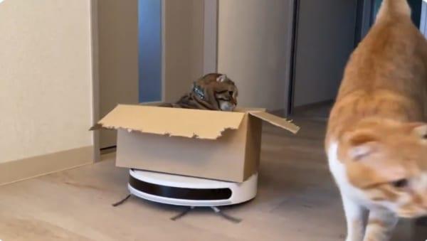 掃除機ライダーな猫の運転ミスが話題 まさかの事故に可愛いの大合唱