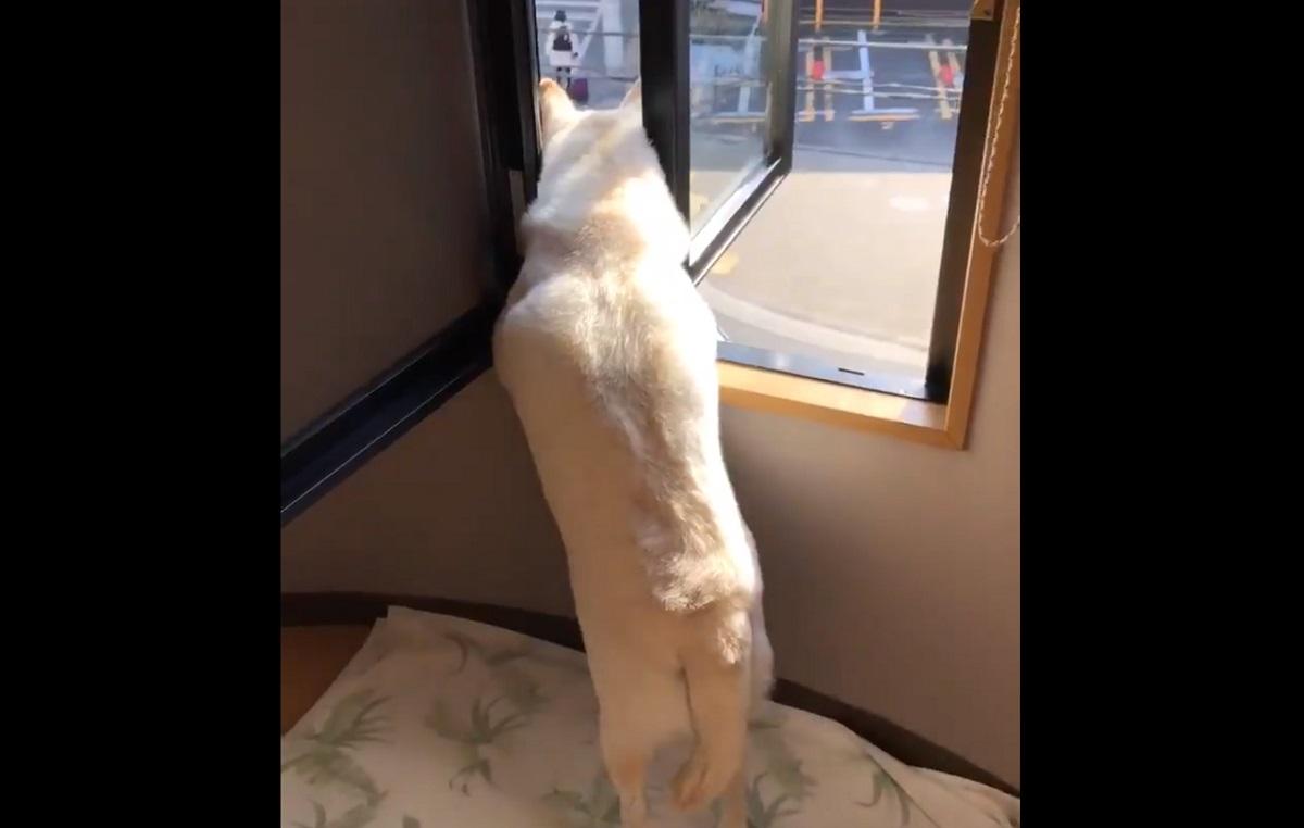 泣ける…家族を見送る犬の後ろ姿が切ない