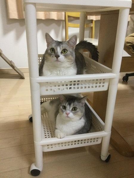 サイドワゴンで落ち着いている猫