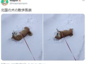 「雪国犬あるある」がTwitterで投稿され話題に。
