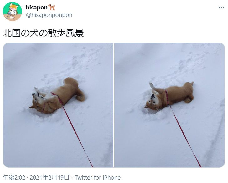 北国の犬の散歩風景が話題 雪に飛び込み大はしゃぎ