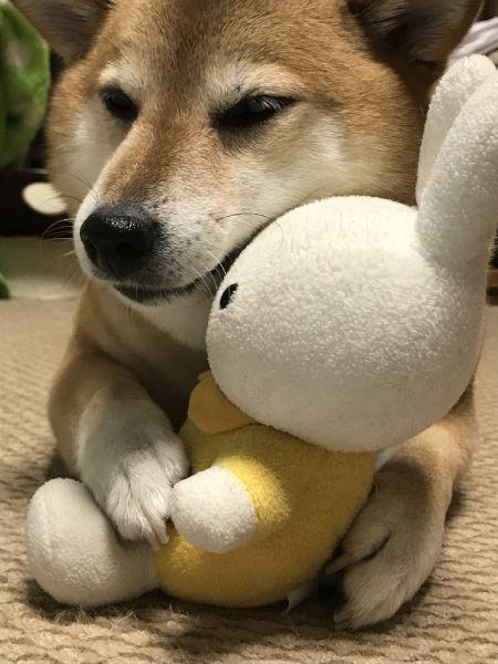 室内犬のため、普段は飼い主宅での様子を投稿。