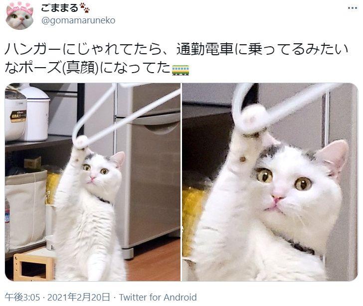通勤途中の猫!? 決定的瞬間がTwitterで目撃される。