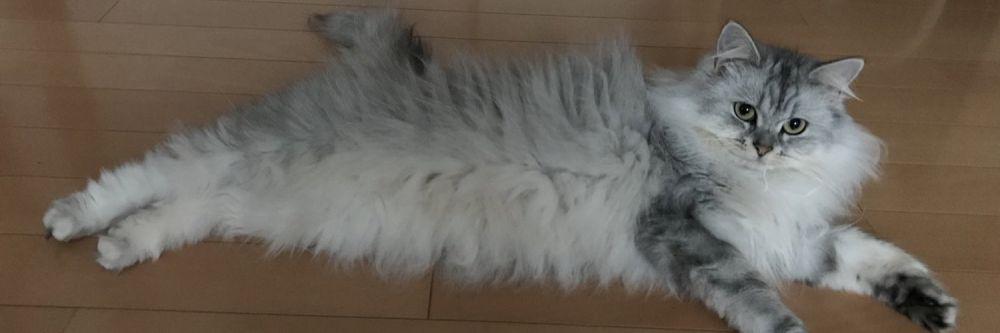 モフモフした被毛が特徴的なミントちゃん。