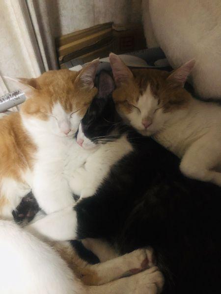 あずきちゃん以外に、おはぎちゃんとくーすけちゃんの2匹も飼われている飼い主。3匹はとっても仲良しです。