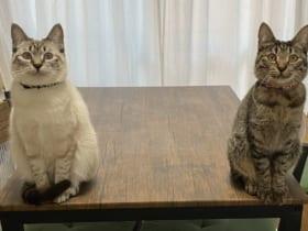 帰宅後の飼い主の前に待ち構えていた猫が話題。