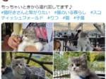 「どこでもいっしょ」旅先で撮った愛猫の写真がTwitterで話題。