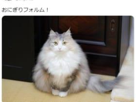 「おにぎりフォルム」と称された猫がTwitterで大反響。