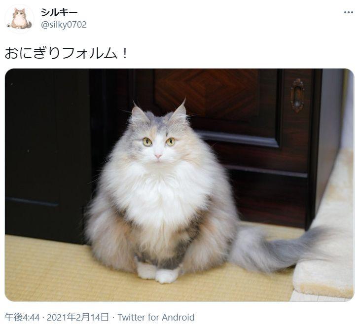 その姿は冬専用 おにぎりフォルムになった猫