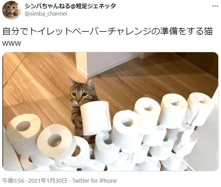 トイレットペーパーチャレンジ準備中の猫が激写される