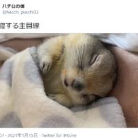 リスと添い寝する体感動画に多くのTwitterユ…