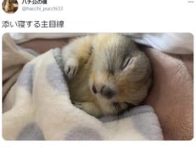 「添い寝する主目線」と命名されたリス動画が多くのTwitterユーザーを悶絶する事態に。