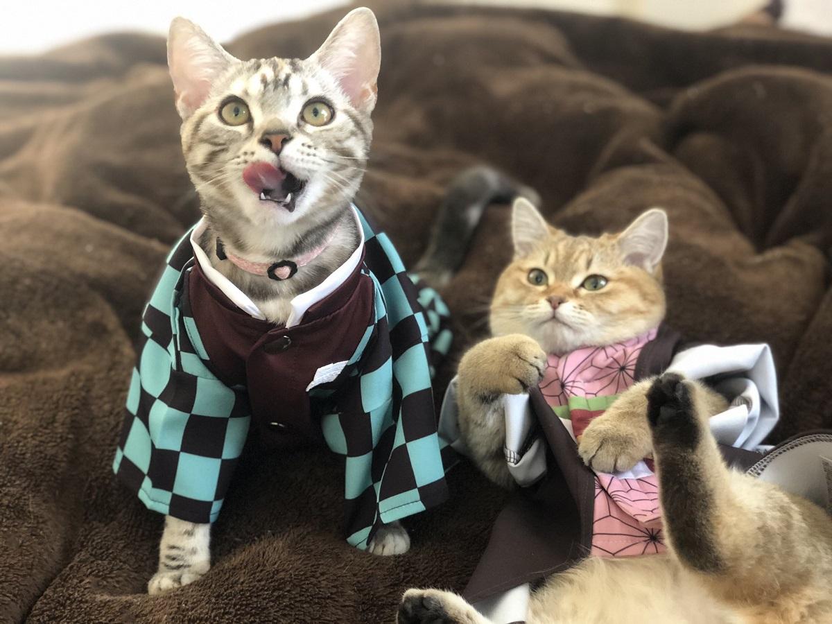 鬼滅コスの猫に全集中 鬼になって退治されたい人が続出してしまう