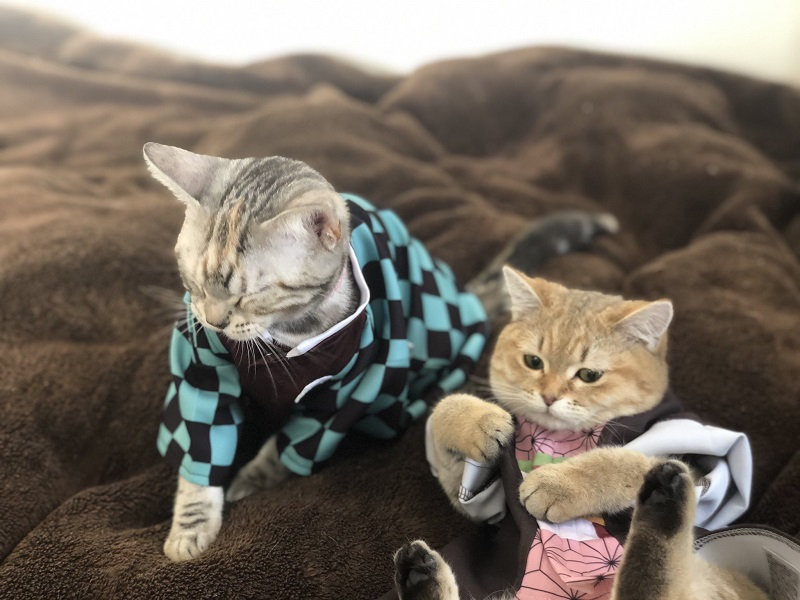 炭治郎と禰豆子の衣装を見事に着こなすムギちゃんとおこめちゃん