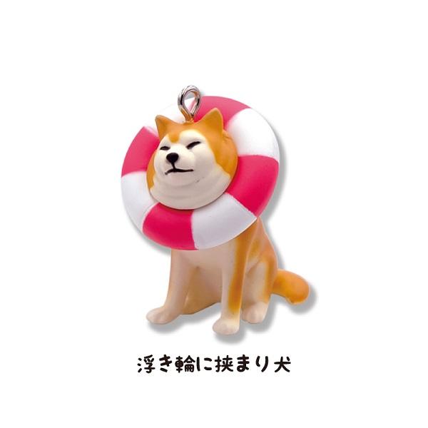 「浮き輪に挟まり犬」