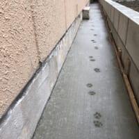 作業後のコンクリートに猫の足跡 工務店さん「にゃんてこった」