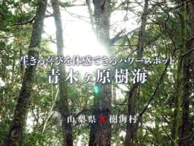 映画「樹海村」と山梨県のコラボ動画が完成
