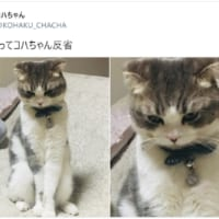 本当に悪いと思っている?反省猫が可愛い