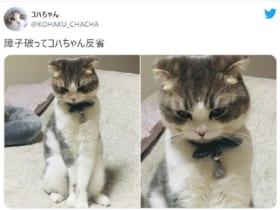 画像提供:コハちゃんさん(@KOHAKU_CHACHA)