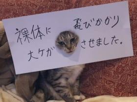 脱衣所で大惨事! 猫がやらかした事実に思わず痛くなる…… ココニャ@猫写真集、発売中!さん(@kokonananya)提供
