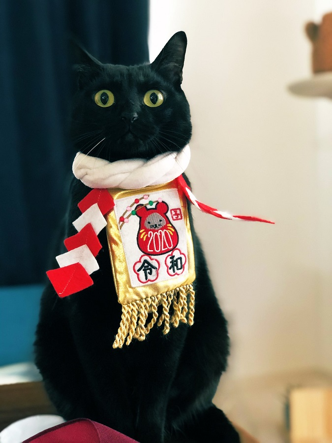 迷子予防に付けてみた猫の首輪 色んな意味で華々しくて「ご利益ありそう」