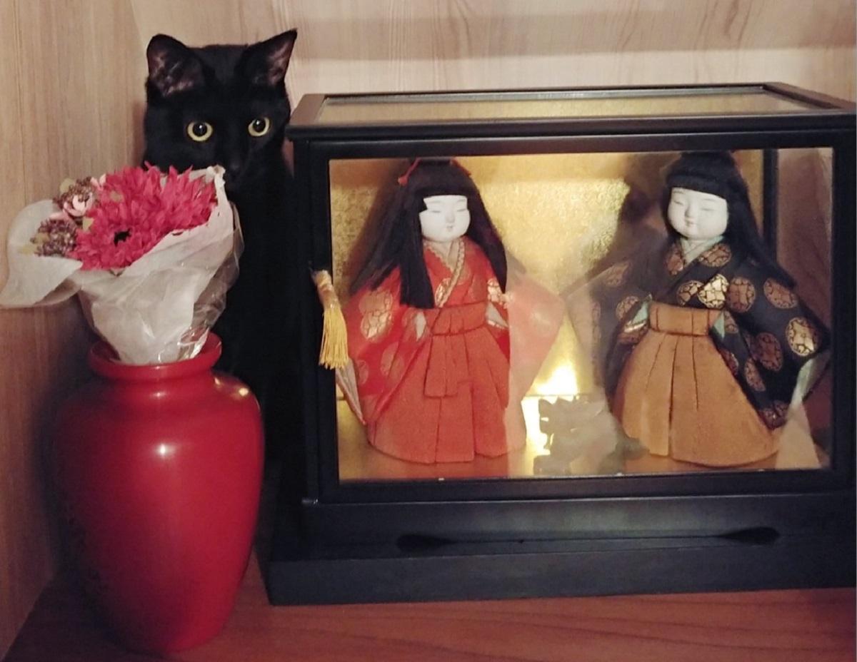 なんで?シレ~ッと置き物に混ざる黒猫