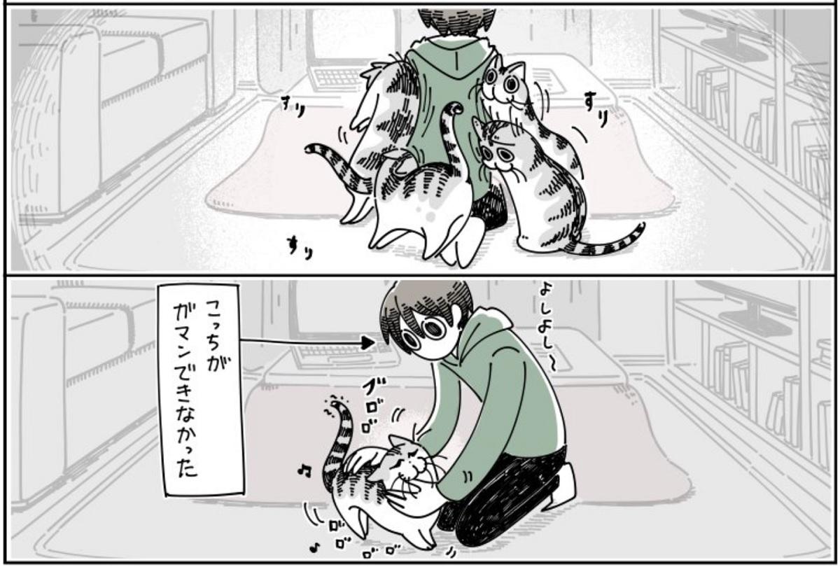 猫飼いあるある 飼い猫の構ってちゃんについ…… キュルZ(@kyuryuZ)さん提供