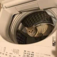 「こっちがビックリしたわ!」洗濯機の中に愛猫
