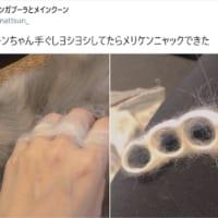 癒やし効果抜群の美しい武器 猫毛で作るメリケンニ…