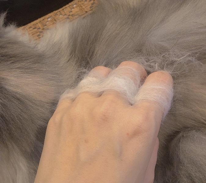 愛猫メインクーンちゃんの毛で出来た奇麗なメリケンニャック