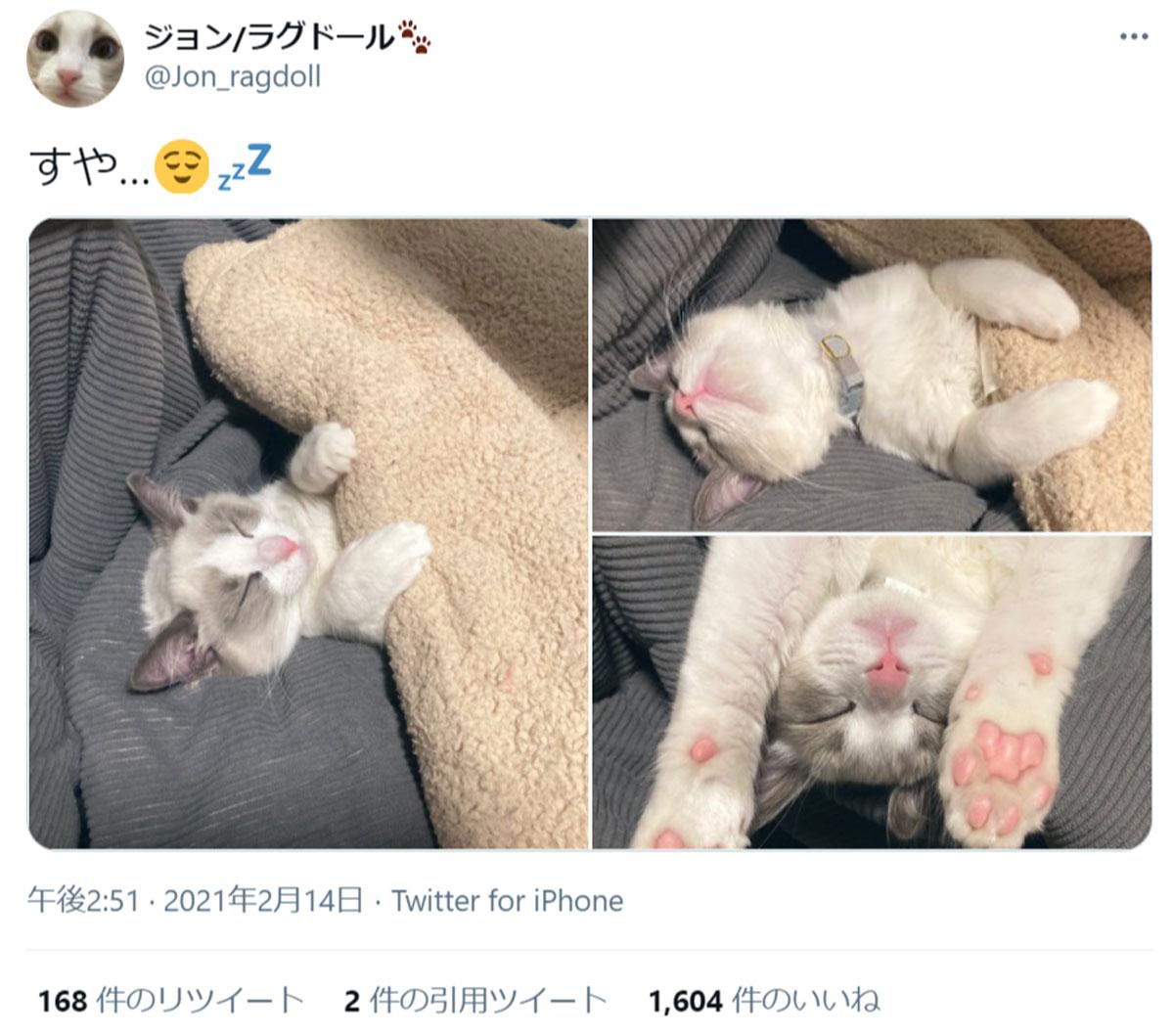 スヤア…… 肉球丸見えの子猫の寝姿が尊すぎる件
