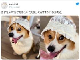 画像提供:momopoiさん(@momopoi)