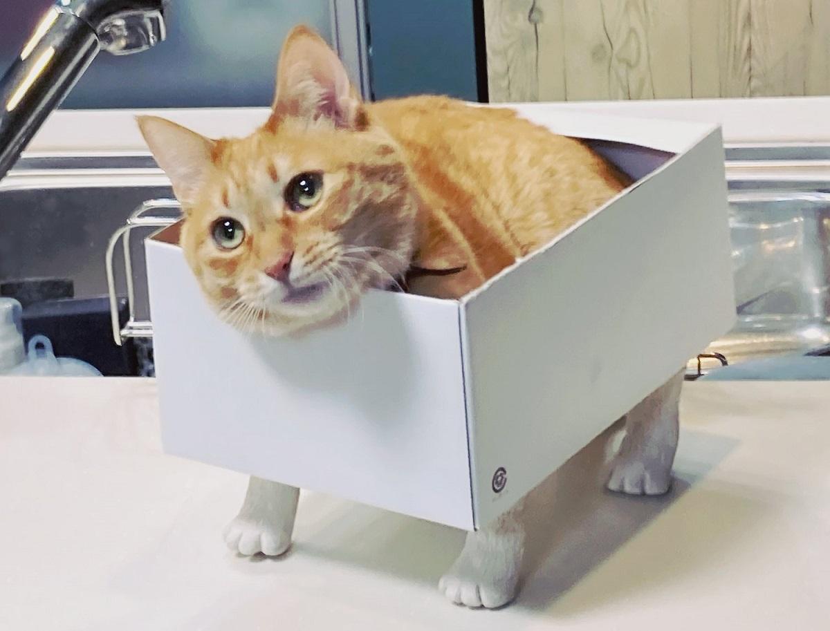 猫脚を段ボールに付けてみた結果→猫が入って爆笑