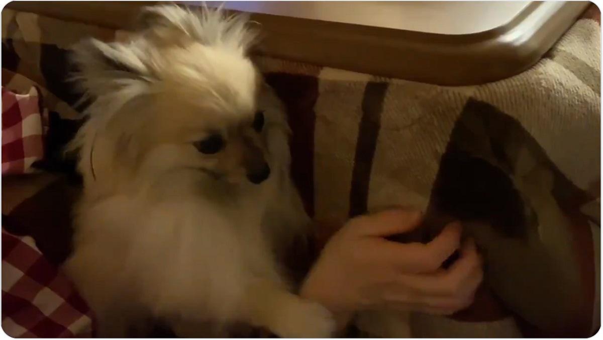 パワハラは嫌だけど……愛犬からの撫でハラが羨ましすぎる