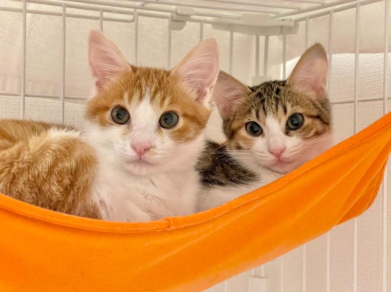 ツナくんはお姉さん猫のマヨちゃんと一緒に暮らしている