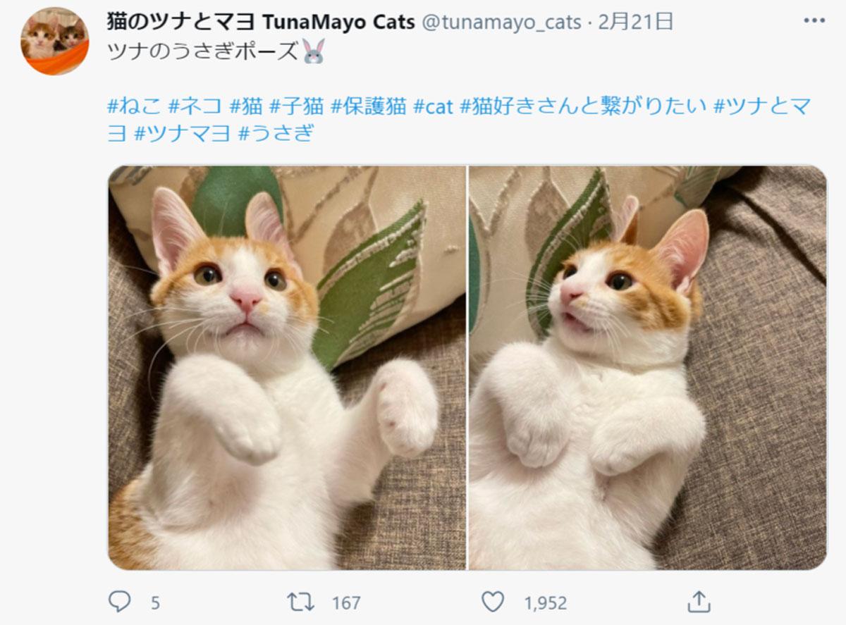 画像提供:猫のツナとマヨ TunaMayo Catsさん(@tunamayo_cats)