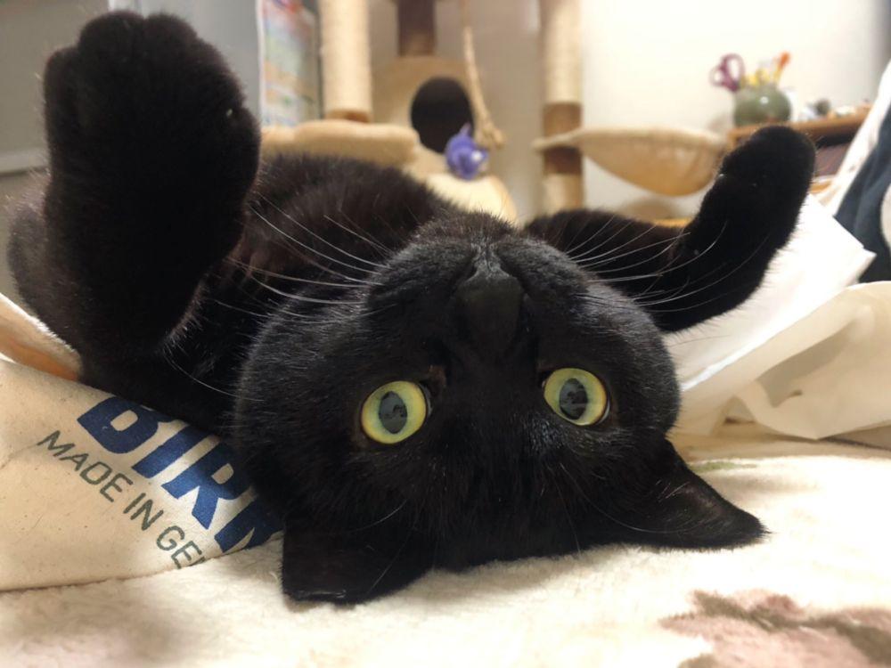 「手の脱力感たまらん」リラックスしきった黒猫に多くのTwitterユーザーが癒された模様。