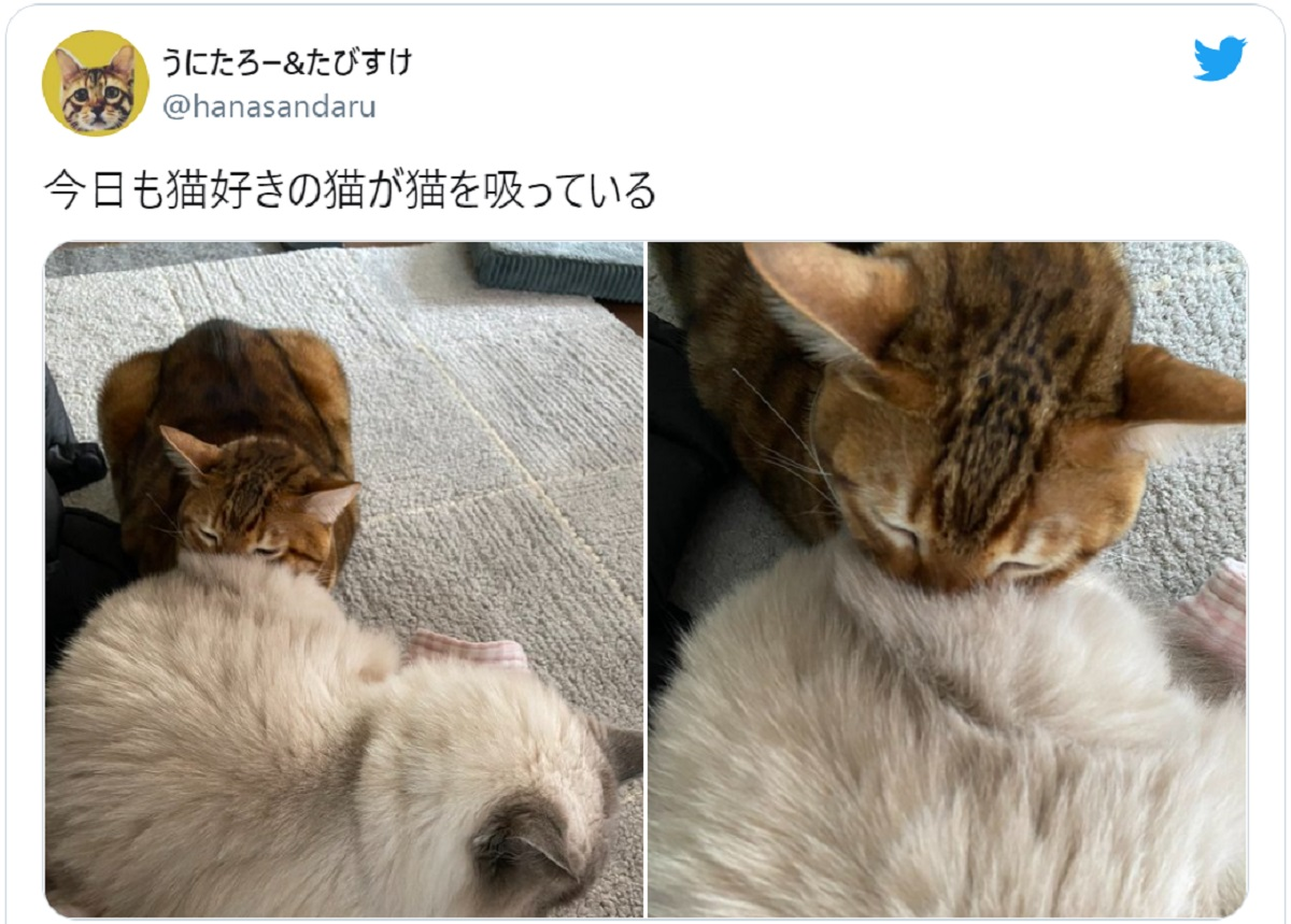 人間だけじゃなかった?猫吸いをする猫