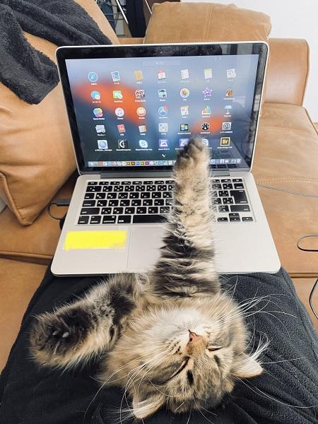 伸びをしている愛猫