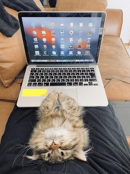 寝ている愛猫