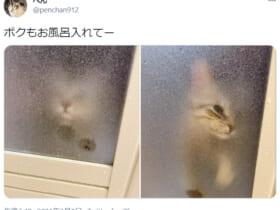 脱衣所から風呂場への入室を熱望する猫の姿がTwitterで話題。
