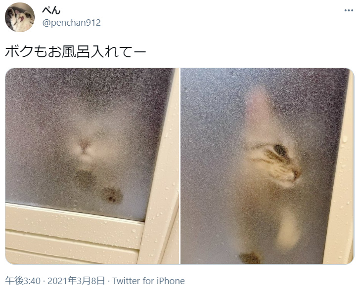 「ボクもお風呂いれてー」と懇願する猫 でも入浴は大嫌い