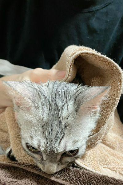 お風呂好きと思いきや、実際は大の苦手なぺんちゃん。