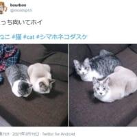 「こっち向いてホイ」 猫兄弟の反応がぴったりシン…