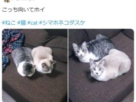 見事なシンクロを見せる振り向き美猫兄弟が話題。
