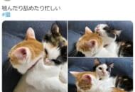 姉に積極的なアプローチをする妹猫の姿がTwitterで話題。