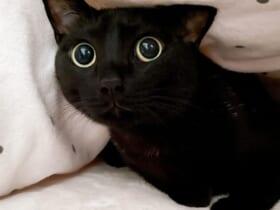 キュルルンとした黒猫のキャッツアイに目が釘付けになったTwitterユーザーが続出