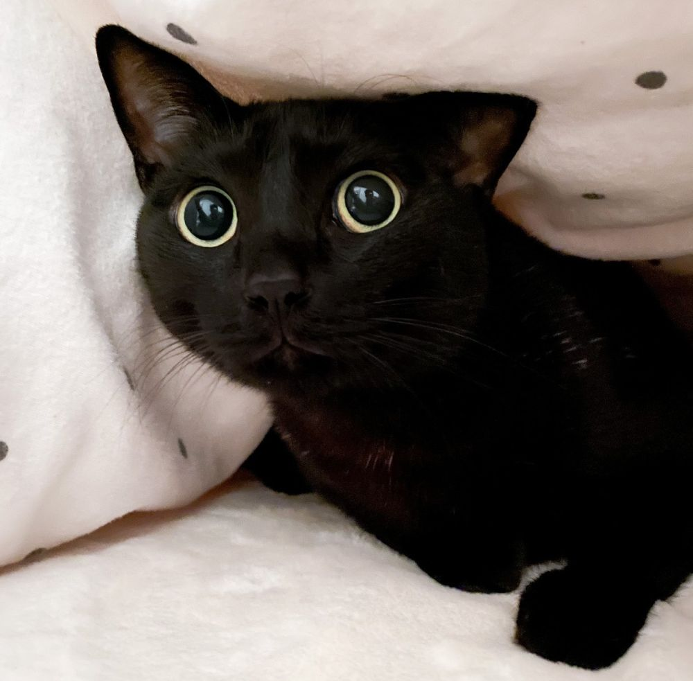 驚いたときにみせた黒猫の瞳が「おめめキュルルン」